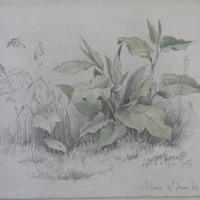 Wicklow, 9th June 61, … ? bur Garden
