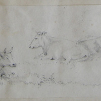 Untitled [Cows in a field]
