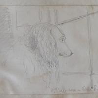 Mr Buff sees a little dog