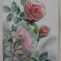 from our garden, Enniscorthy, June 1862
