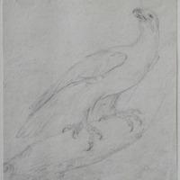[bird of prey]