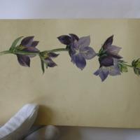 Enniscorthy June 1862. Still life Watercolour flower