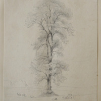 Co. Meath [tree in parkland setting]