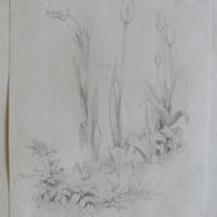 Slane Garden May 1866