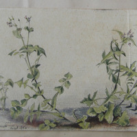 In my yard, Shanganagh Terrace (Killiney), August 1860
