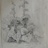 in Mr. Mills Garden Slane May 1866
